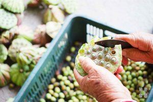 台南特產伴手禮 芒果季在台南6月!不能錯過山線農特產!